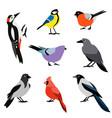 set of winter birds flat design birds icon vector image