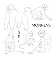 different types monkeys vector image