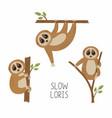set loris on tree branches cute lorises vector image