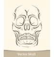 skull isolated on white background vector image