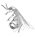 firefly vector image vector image