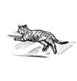 lying cat sketch vector image vector image