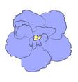 saintpaulia flower vector image vector image