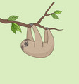 sloth on tree vector image
