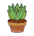 succulent in potted vector image vector image