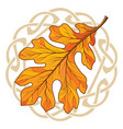 oak leaf in autumn coloring and celtic magic vector image vector image