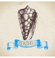 Seashell hand drawn sketch vector image vector image