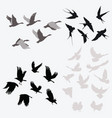 set silhouettes flocks birds collection vector image
