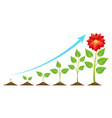 growing stages cycle vector image vector image