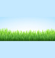 realistic fresh spring green grass field vector image vector image