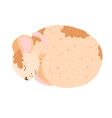the little rat mouse sleeps curled up with brown vector image