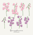 hand drawn sweet pea pink and violet spring vector image vector image