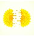 split flower vector image vector image