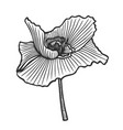 hand drawn poppy vector image vector image
