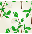 seamless texture buds white rose stem with leaves vector image vector image