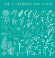 set of hand-drawn wildflowers vector image vector image