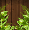 Summer background with green tropical leaves vector image