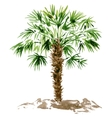 watercolor palm tree vector image vector image