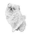 Dog 12 vector image
