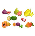 tropical fruits isolated cartoon icons set vector image vector image