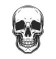 vintage human skull concept vector image