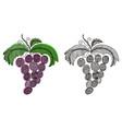 beautiful grape vector image