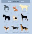 cute funny cartoon dogs vector image
