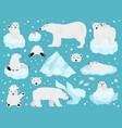polar bears set teddy bear in arctic vector image