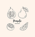 pomelo fruit graphic drawing sketch vector image