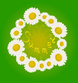 summer chamomile flowers in a circle vector image vector image