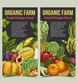 banner or flyer with vegetables and fruits vector image vector image