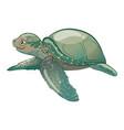 cartoon sea turtle sweet turtle baby vector image vector image