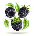 realistic blackberry juicy fruit in motion vector image vector image