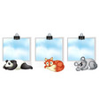 three frames with wild animals vector image vector image