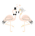 beautiful cute pink flamingo couple wedding card vector image