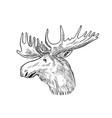 head a bull moose or elk alces alces vector image vector image