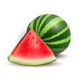 watermelon realistic icon vector image