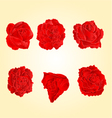 Blossom red roses symbol of love vector image vector image