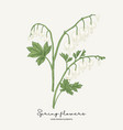 hand drawn dicentra white heartshaped spring vector image