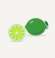 lime flat icon vector image vector image