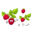 Ripe isolated red rasberry fruit vector image vector image