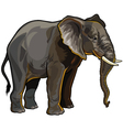 african elephant profile vector image vector image