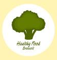 broccoli healthy food concept vector image vector image