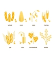 Cereal grains icons rice wheat corn vector image vector image
