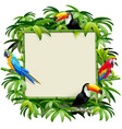 bamboo frame with tropics birds vector image