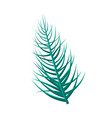 dypsis lutescens tropical leaf vector image vector image