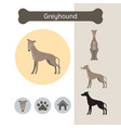 greyhound dog breed infographic vector image vector image