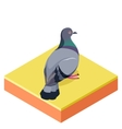 Isometric Pigeon on the square ground vector image