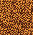 leopard pattern vector image