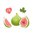 set hand drawn figs fruits vector image